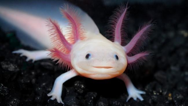 Замечательный розовый дракончик.