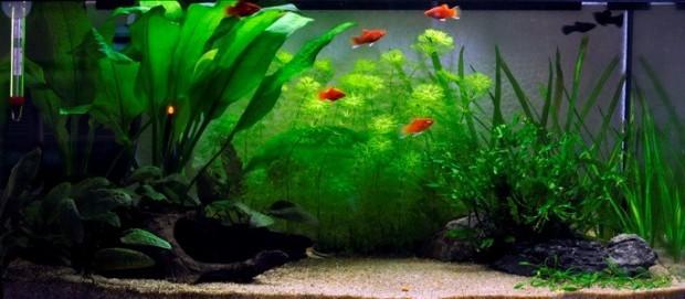 аквариум 40 литров