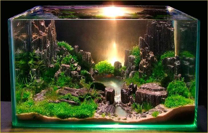 обустроенный аквариум