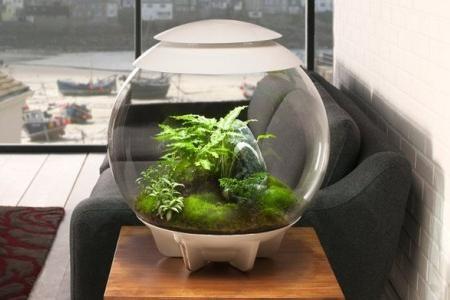 растения в круглом аквариуме