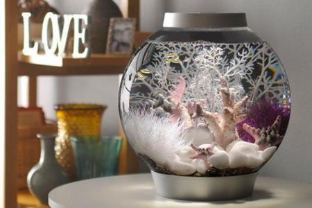 оригинальное оформление в круглом аквариуме
