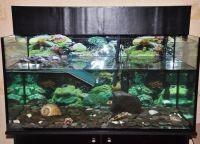 Аквариум для черепах13