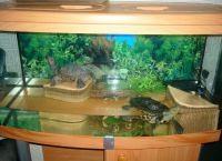 Аквариум для черепах14
