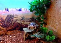 Аквариум для черепах7
