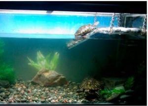 Островок для черепахи своими руками7
