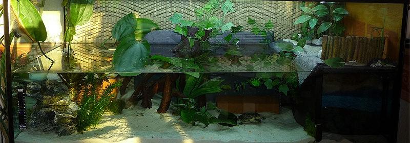 Обустраиваем аквариум для красноухой черепахи своими руками 151