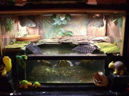 Обустраиваем аквариум для красноухой черепахи своими руками 108