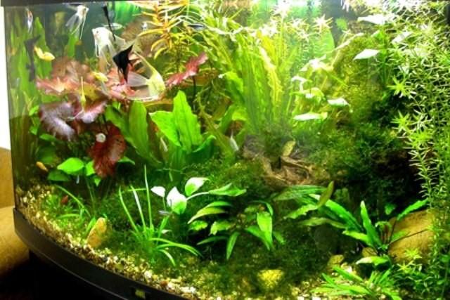 Почему не растут растения в акваиуме
