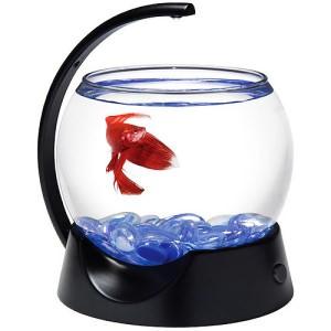 круглый аквариум для петушка