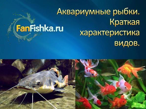 Брошюра популярные виды аквариумных рыбок
