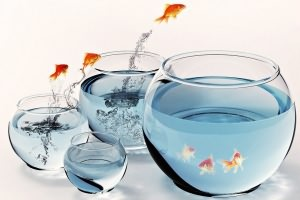 аквариумистика для начинающих