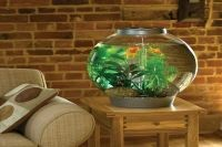 расположение аквариума по фен шуй 8