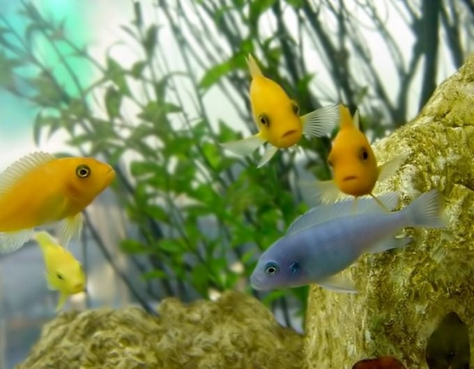 Как содержать морской аквариум