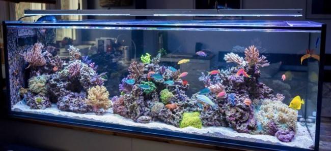 Морской аквариум дома.