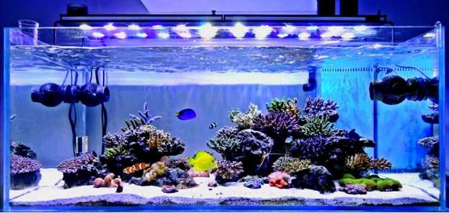 Освещение в морском аквариуме.