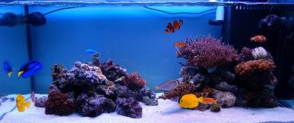 morskoy_akvarium_smeshannogo_tipa_
