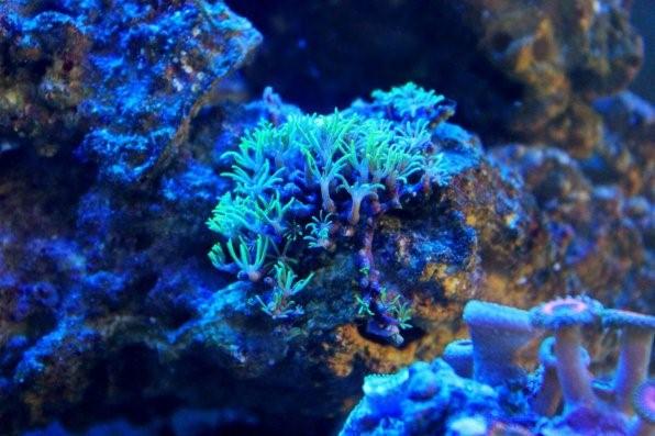 живые камни для морского аквариума