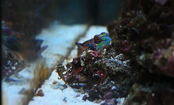 живой песок для морского аквариума