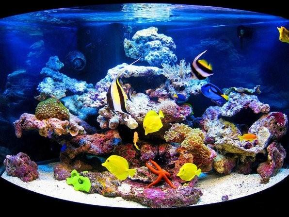 Морской аквариум у вас дома! С чего начать и сколько стоит?