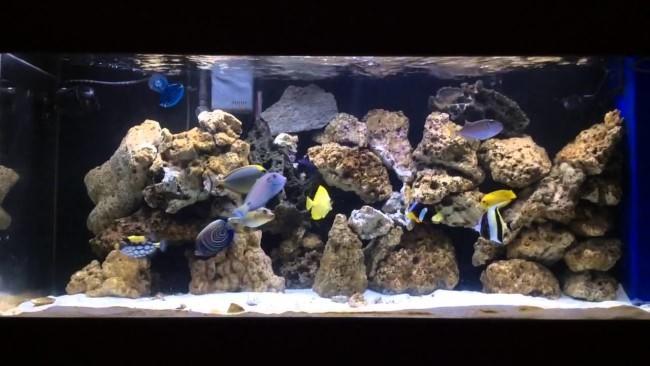 Разнообразные морские рыбки.
