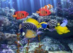 Аквариумные рыбки уход и содержание