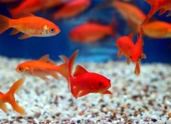 Аквариумные рыбки уход и содержание1