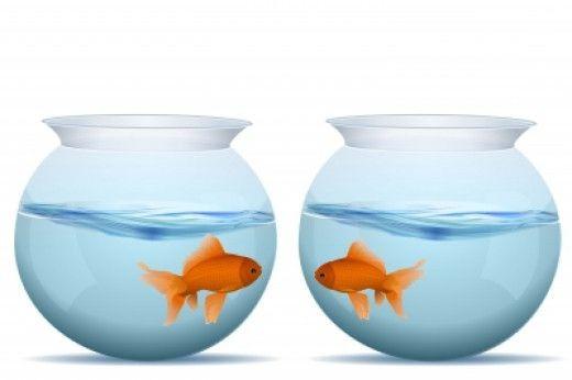 золотые рыбы в аквариуме