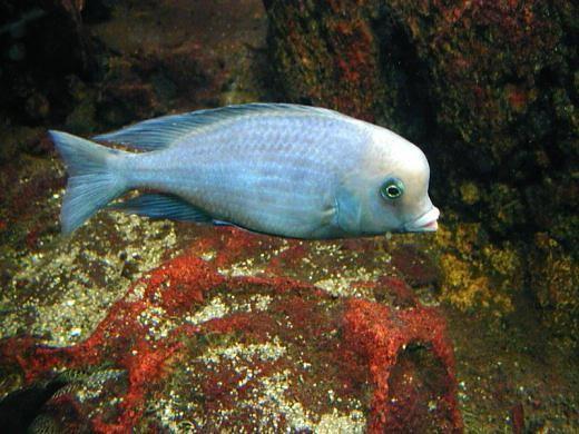 голубой дельфин фото