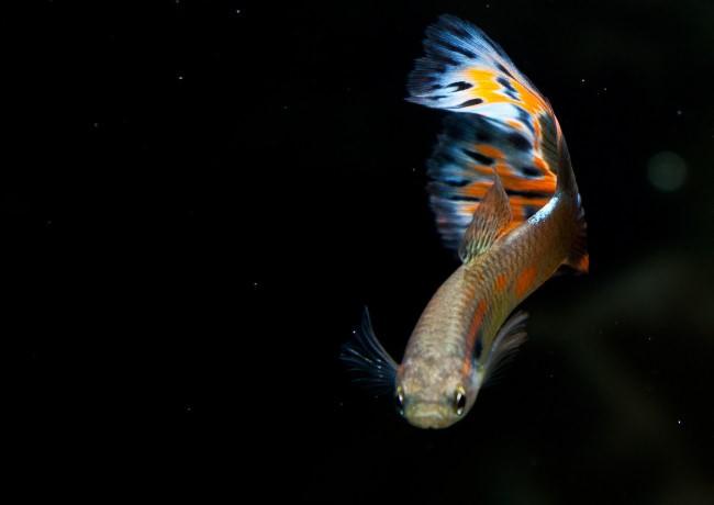 Рыбка с красивым окрасом.