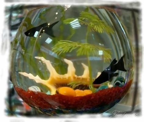 дизайн небольшого аквариума