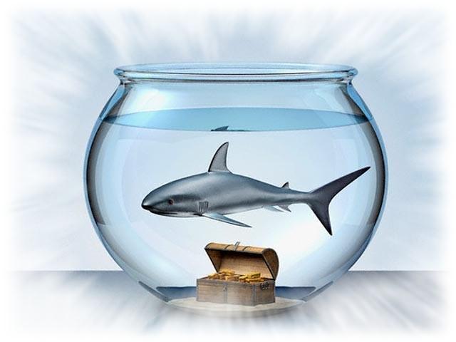 аквариум из банки