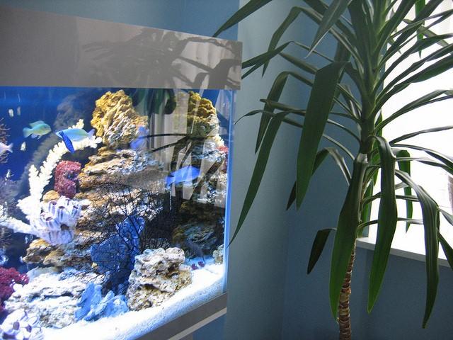 как сделать самому фильтр для аквариума