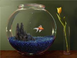 аквариумных рыбок для маленького аквариума
