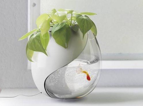 неприхотливые рыбки для маленького аквариума