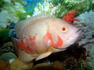 Каких рыбок завести начинающему аквариумисту