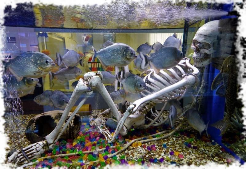 скелет в аквариуме