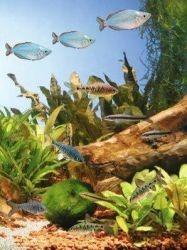 Аквариумные рыбки уход за ними