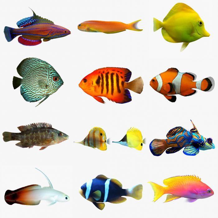 Таблица совместимости видов аквариумных рыб
