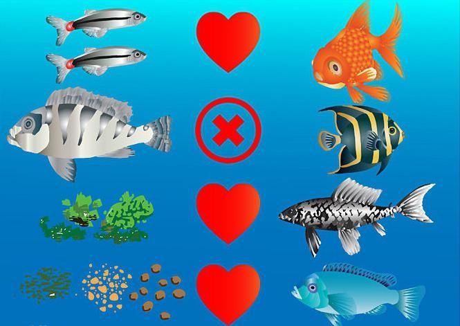 Совместимость аквариумных рыбок, таблицы и сведения