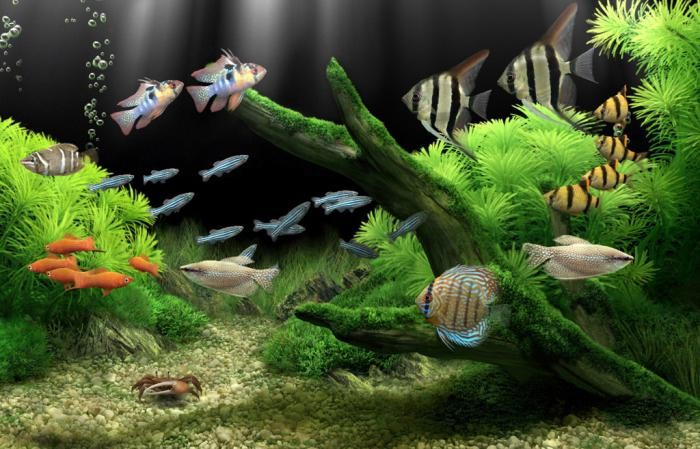 Совместимость аквариумных рыб, таблица
