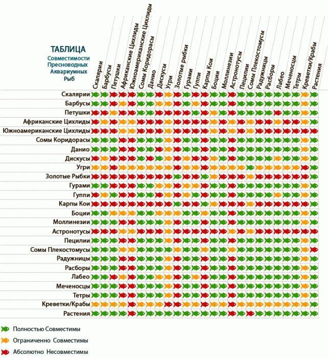 таблица совместимости аквариумных рыбок