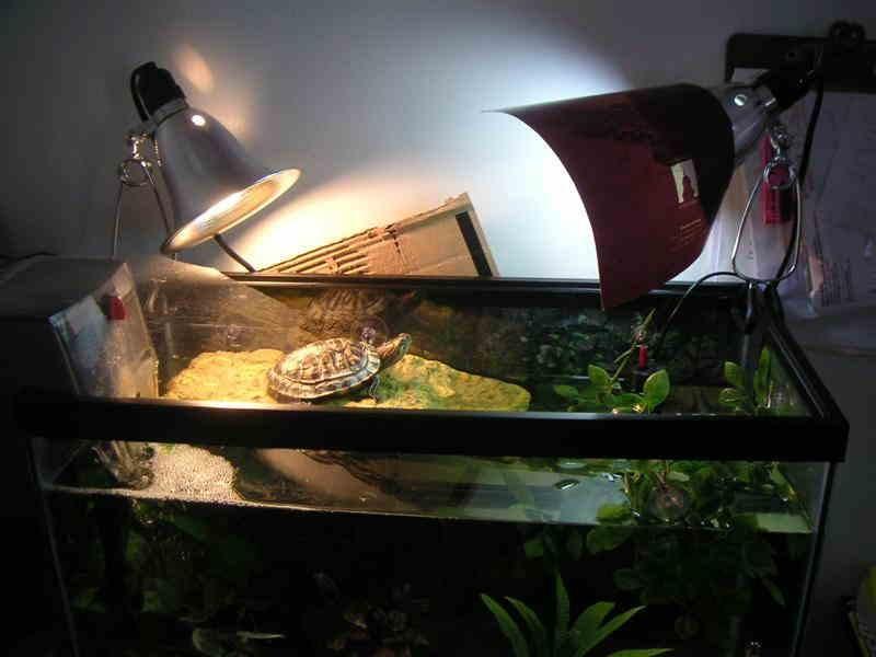 Обогрев и УФ лампа для черепахи