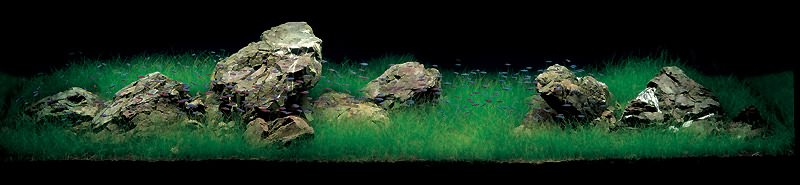 аквариум Амано с элеохарисом