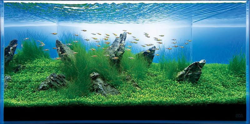 аквариум Такаши Амано с элеохарисом