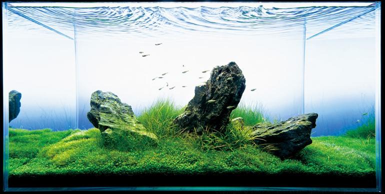 аквариум ТАкаши Амано с элеохарис парвула