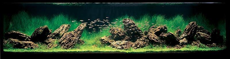 фотография аквариума Такаши Амана ивагуми