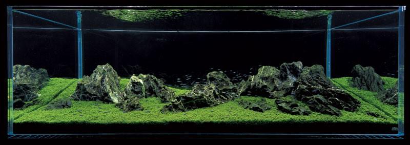 аквариум Такаши Амано ивагуми