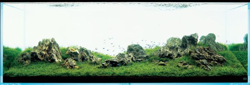 фото Такаши Амано аквариум ивагуми