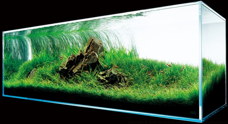 аквариум Такаши Амано под углом