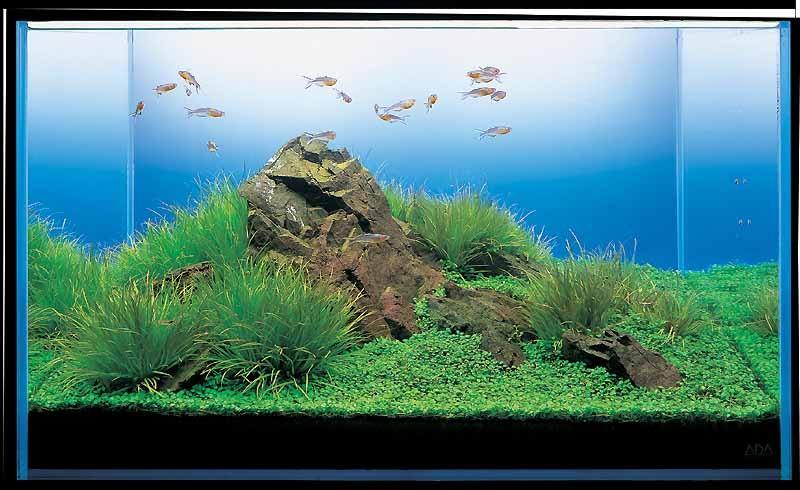 аквариум Такаши Амано с блиской
